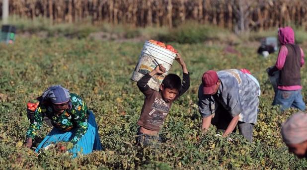 Trabajo infantil y explotación laboral: cruda realidad en México