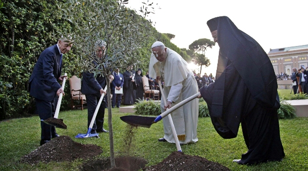 Un olivo simbólico