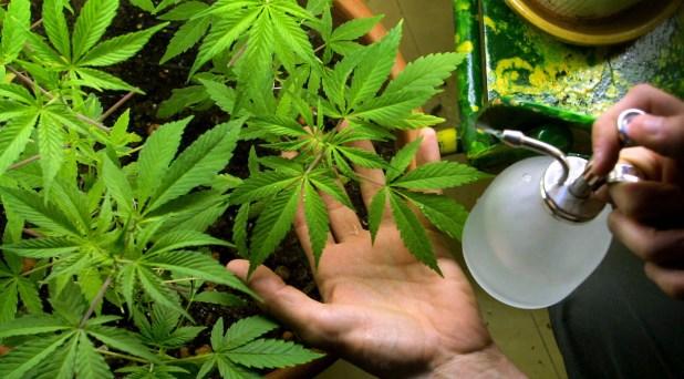 ¿Qué hacemos con la marihuana?
