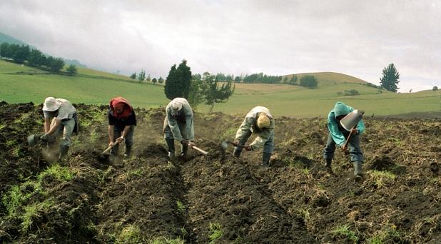 Agro latinoamericano: justicia, desarrollo y paz