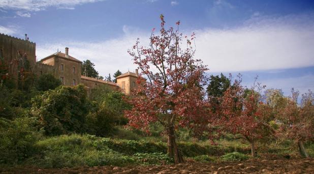 20 años después, abrirán Monasterio de los trapenses asesinados en Argelia