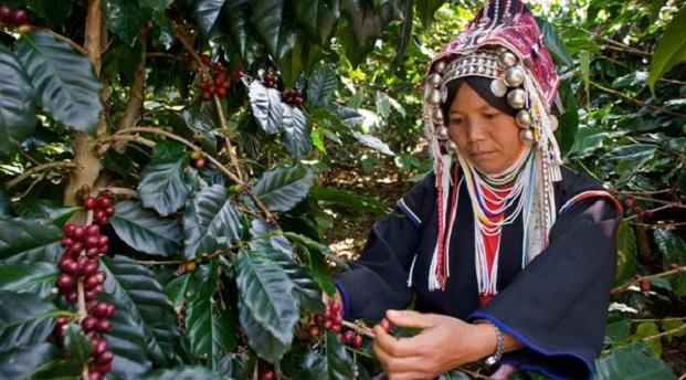 """Proyecto """"Café Bruno"""": fe y educación para jóvenes asiáticos"""