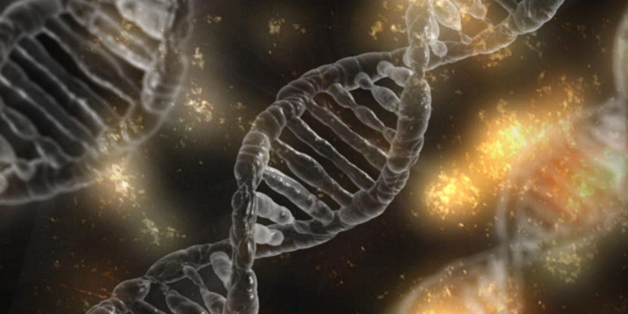 Genética, ambiente y libertad