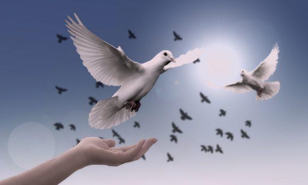 Vital, la construcción de la paz para el desarrollo social