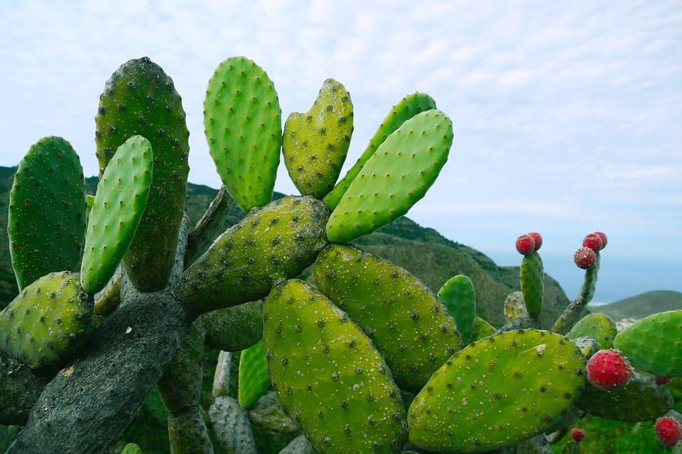 El mexicano que combate la pobreza en África con ayuda del nopal