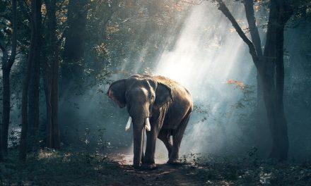 Desplazamientos de animales y medioambiente