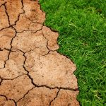 Declaración conjunta sobre la justicia climática, emitida por las conferencias episcopales