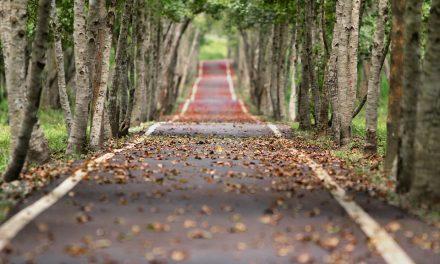 Bienaventuranzas, camino de madurez