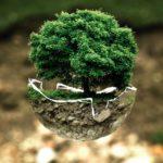 """""""Caritas in veritate"""", ecología humana y ecología ambiental"""