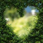 La conversión ecológica: es tarea de todos los católicos (te incluye a tí)