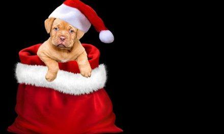 Una mascota, un regalo que cuesta