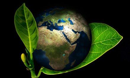 De Laudato si', un decálogo ecológico