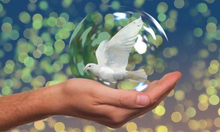 Mensaje de la Jornada Mundial de la Paz 2020