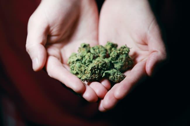 ¿Regulación de la marihuana?