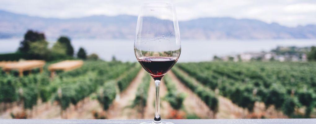 No está demostrado que el vino o los taninos sean beneficiosos para prevenir la covid-19