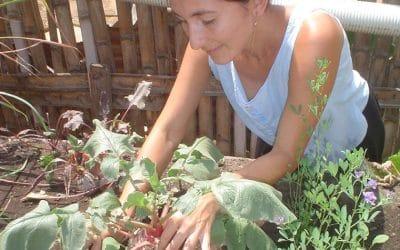 Huertos urbanos y rurales: mejores alimentos, mejores comunidades